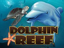 Качественная графика и отличные бонусы – это игра Риф Дельфина