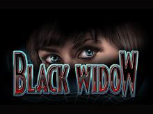 Черная Вдова – IGT автомат виртуальный