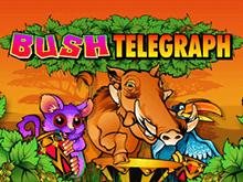 Автомат 3D Bush Telegraph от Microgaming