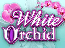Белая Орхидея – настоящее украшение любого онлайн мобильного казино